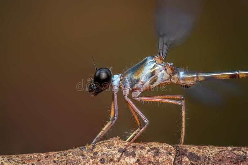 Insect, Dragonfly, Invertebrate, Damselfly stock image