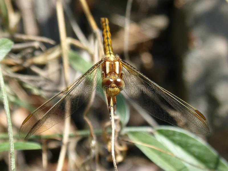 Insect, Dragonfly, Invertebrate, Fauna stock photography