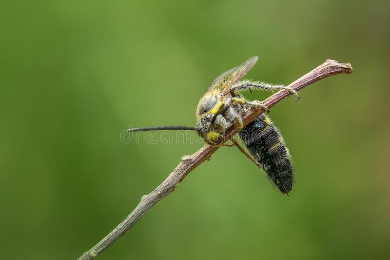 Insect, Dragonfly, Pest, Invertebrate royalty free stock photos