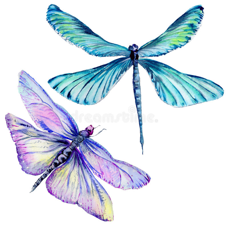Free Insect Dragonfly Set In A Watercolor Style Isolated. Royalty Free Stock Images - 93818239