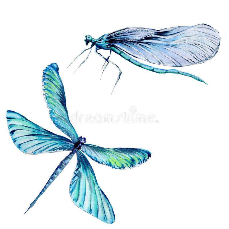 Free Insect Dragonfly Set In A Watercolor Style Isolated. Stock Photos - 93818283