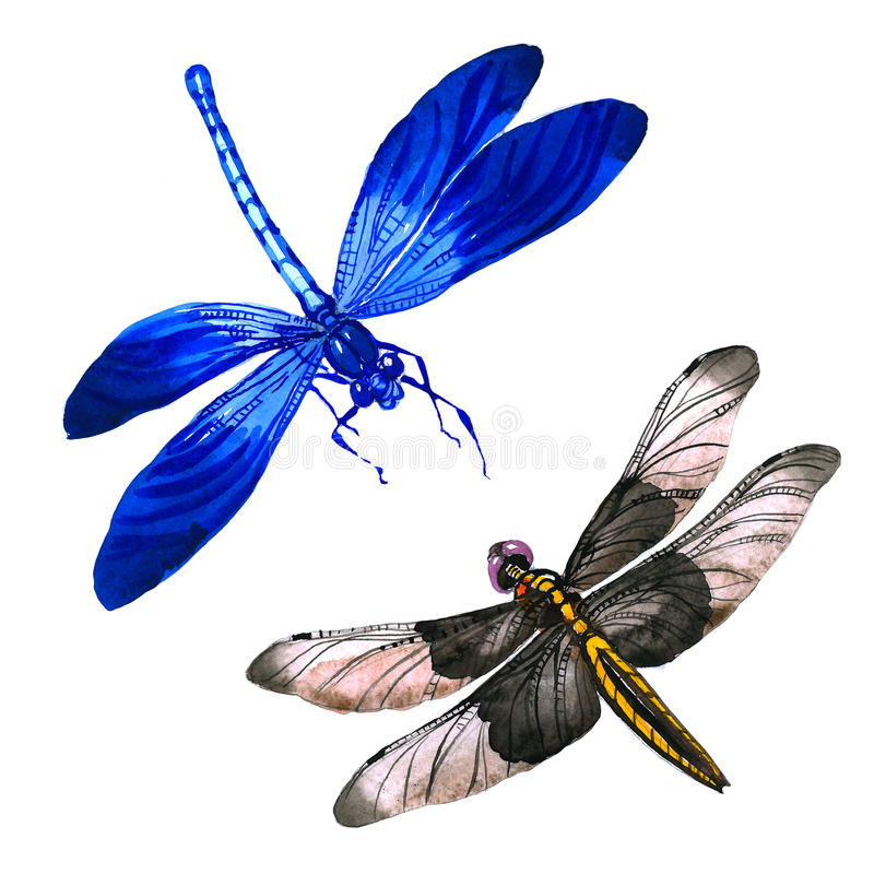 Free Insect Dragonfly Set In A Watercolor Style Isolated. Royalty Free Stock Photos - 94903148