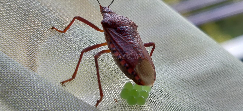 insect en ei royalty-vrije stock foto