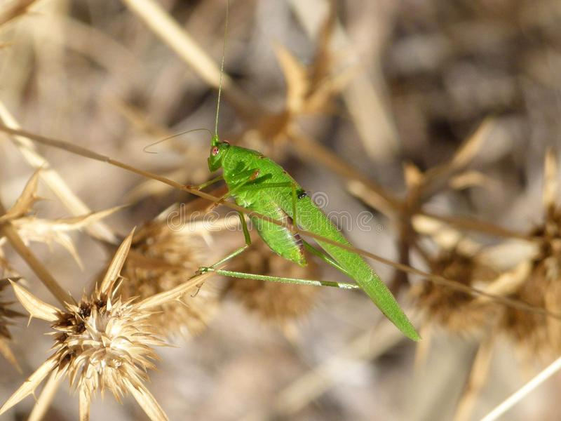 Insect, Fauna, Invertebrate, Grass Family royalty free stock image