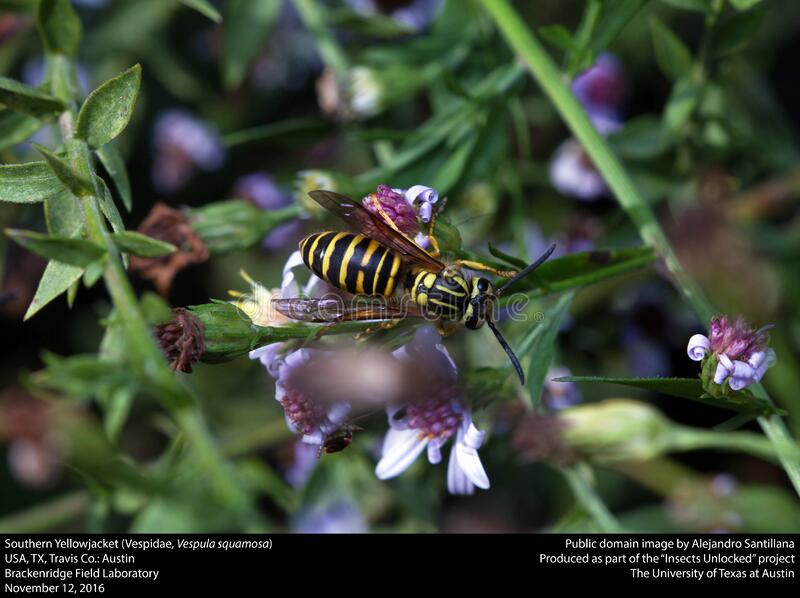Insect, Flora, Bee, Membrane Winged Insect royalty free stock images