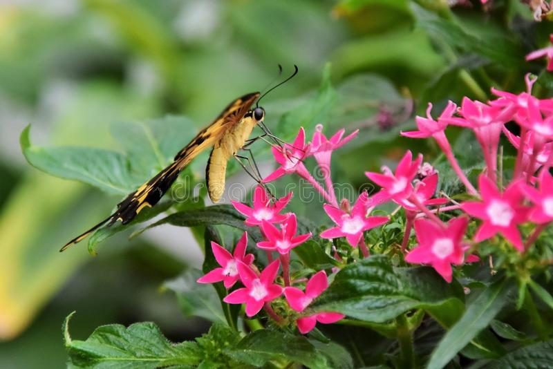 Insect, Flora, Plant, Pollinator stock images