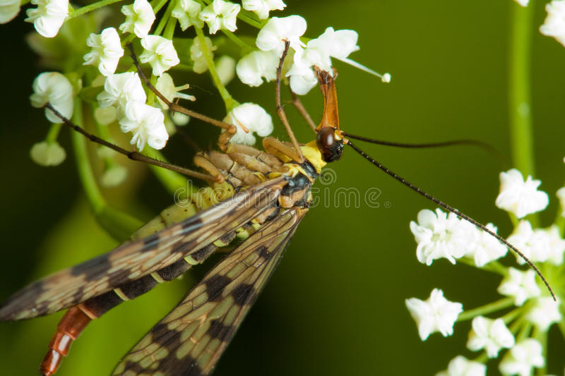 Download Insect on flower stock photo. Image of white, background - 16039154