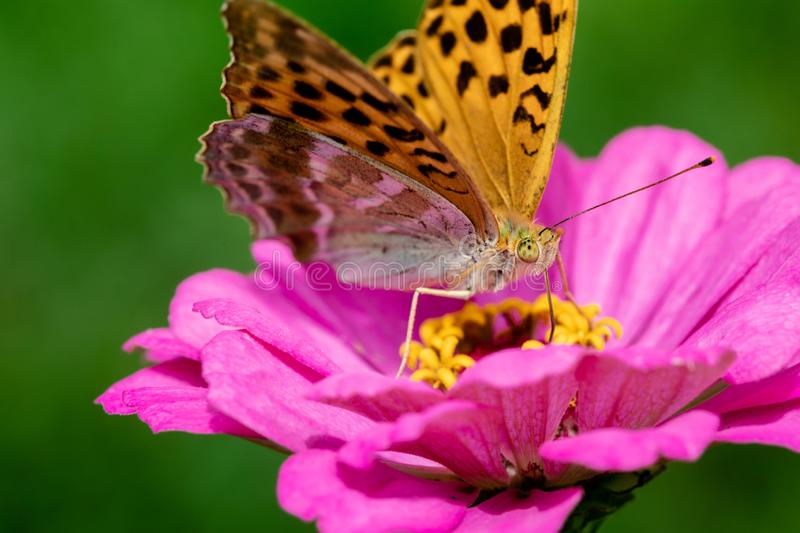Insect on the flower. stock photo