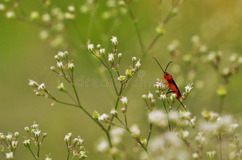 Insect, Flower, Pollinator, Nectar Free Public Domain Cc0 Image
