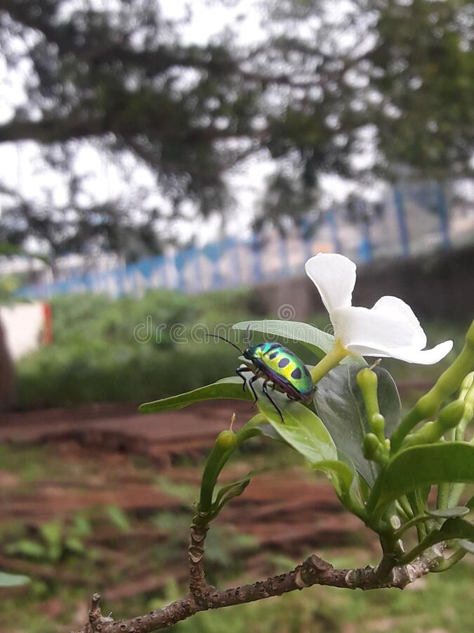 Insect on flower which is very colorful with natural beauty. There is a water mark it is my click and I made this water mark on the picture. If it occurs stock photos