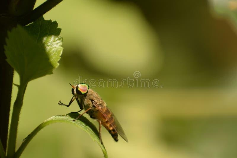 Fabulous wild fly  sitting on leaflet. stock photography