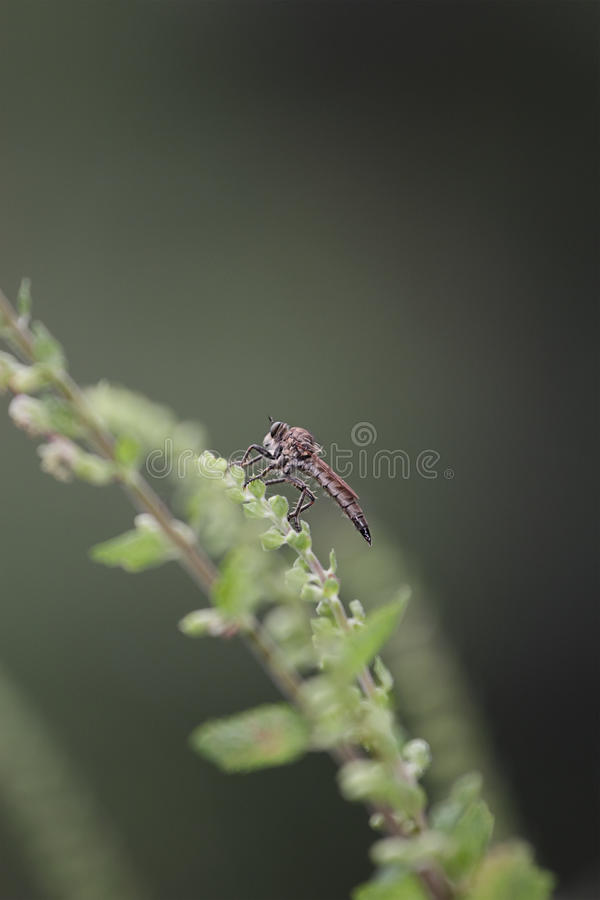 Insect gad daas stock afbeelding