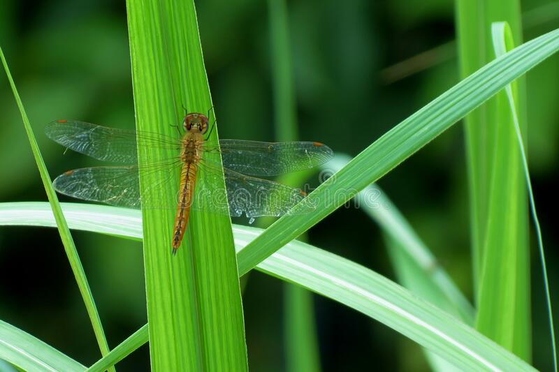 Insect on green grass stock images