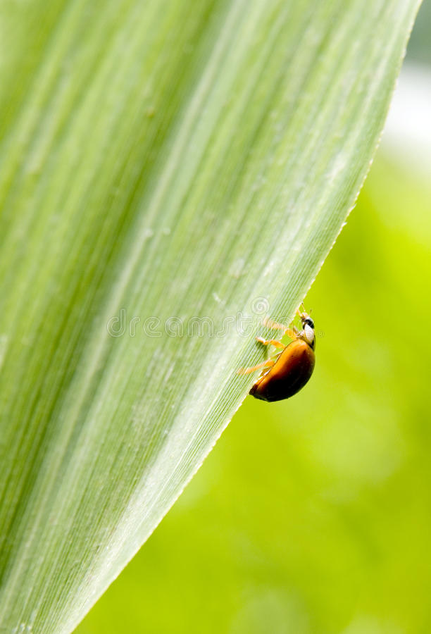 Download Insect in green leaf stock photo. Image of environmental - 14037730