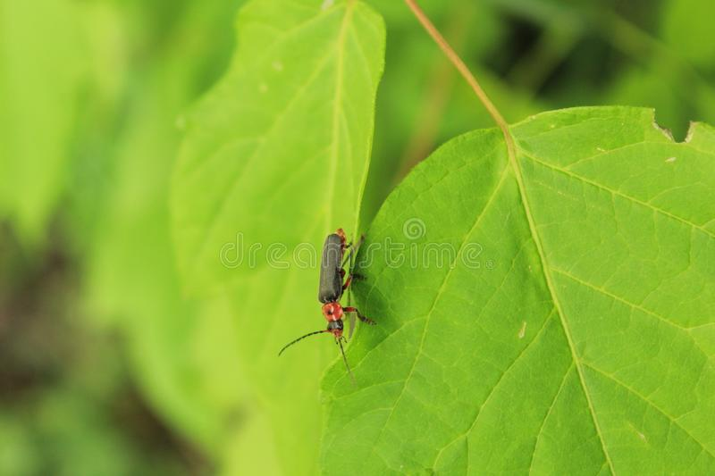 Insect on a green leaf royalty free stock photos