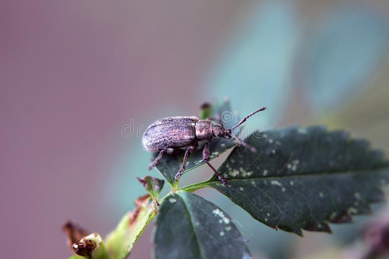 Insect on the leaf stock photography