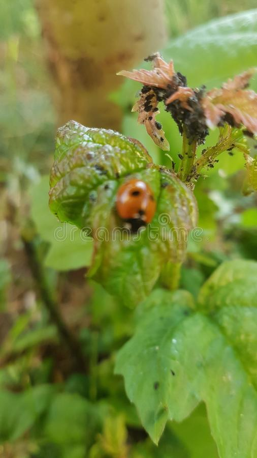 Insect groen Rood stock foto