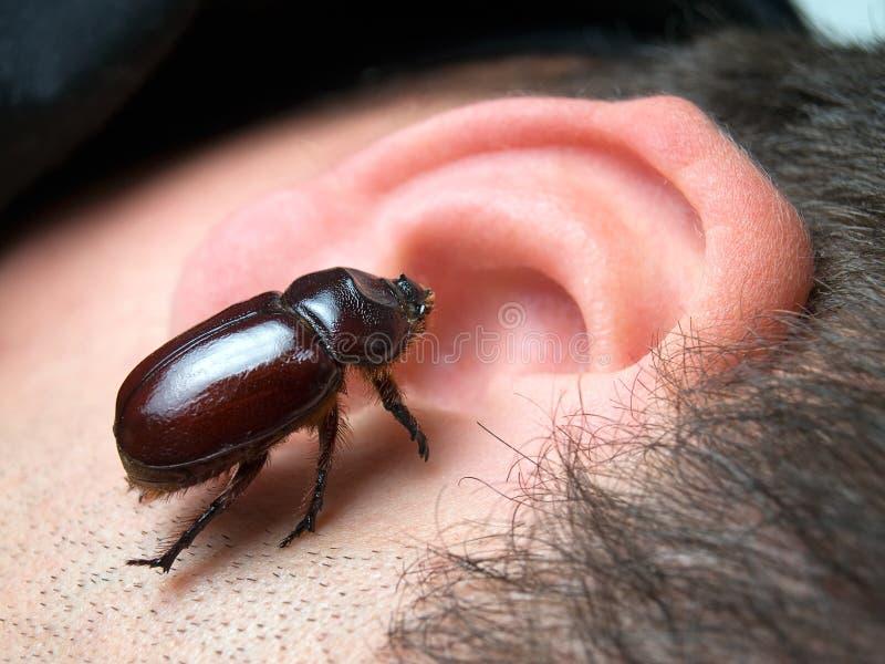 Insect in het oor stock fotografie