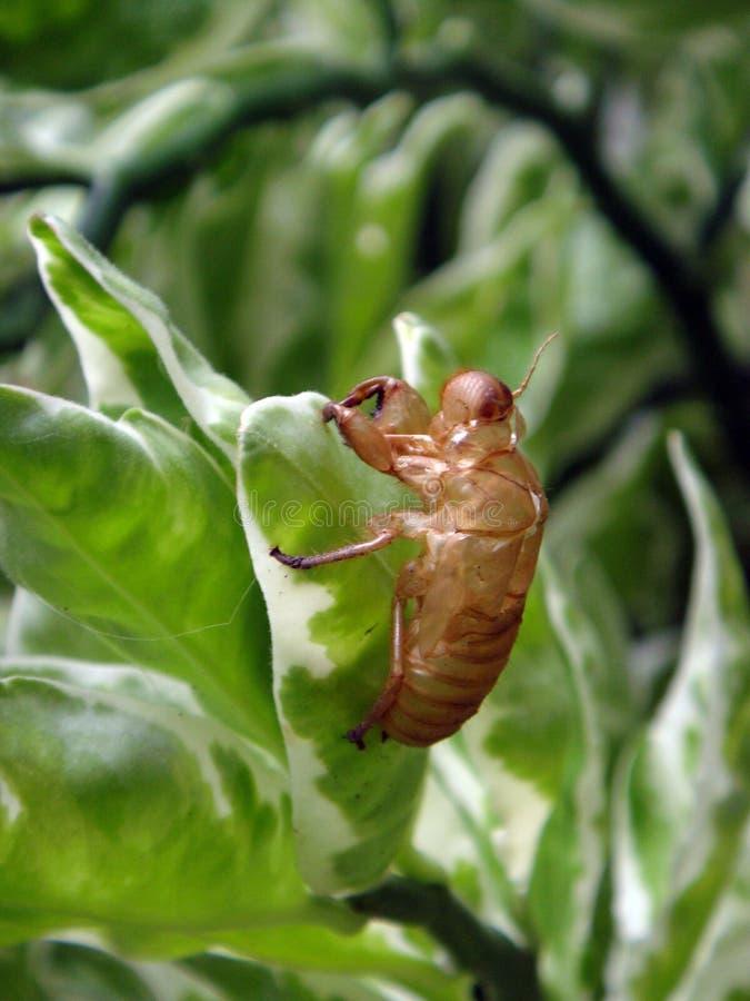 Insect het ruien stock afbeeldingen