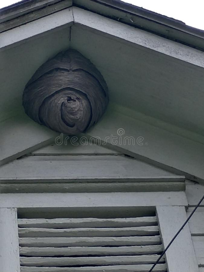 Wasp hive hanging on the roof stock photos