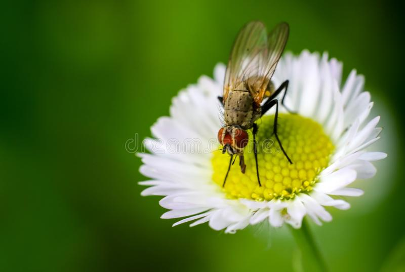 Insect, Honey Bee, Fly, Nectar stock photography