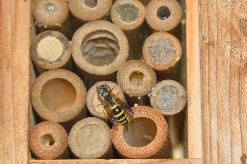 Insect hotel, also known as a bug hotel stock image