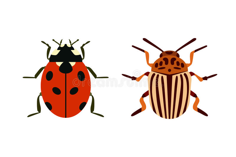 Insect icon flat isolated nature flying bugs beetle ant and wildlife spider grasshopper or mosquito cockroach animal stock illustration