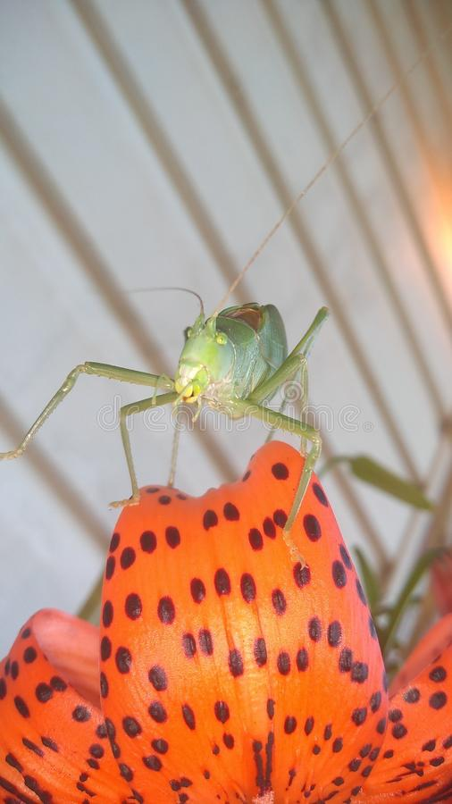 Insect. Hey, greetings, , nature, bug stock photography