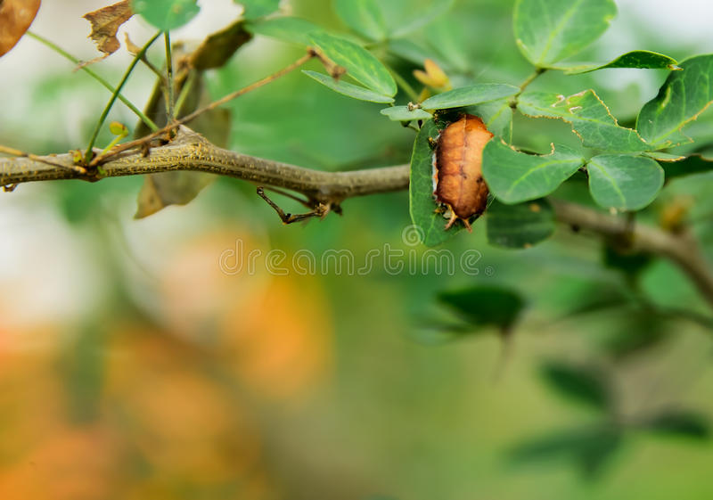 Insect. S are dodging enemy with the leaves still on hold royalty free stock photography
