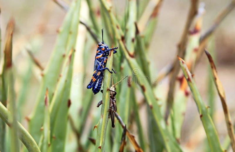 Insect, Invertebrate, Damselfly, Fauna royalty free stock photos