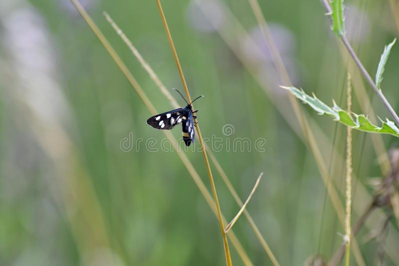 Insect, Invertebrate, Fauna, Butterfly stock photos