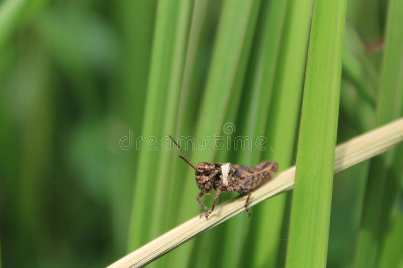 Insect, Invertebrate, Fauna, Grass Family stock photography