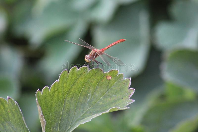 Insect, Invertebrate, Leaf, Fauna royalty free stock photo