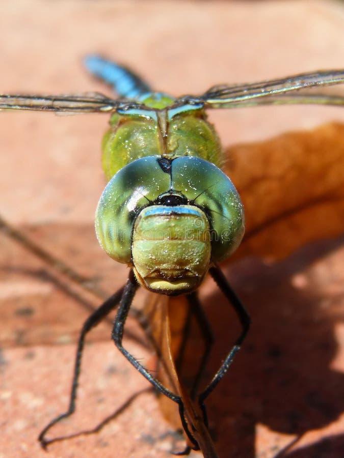 Insect, Invertebrate, Macro Photography, Close Up Free Public Domain Cc0 Image