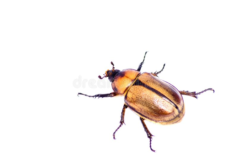 Insect isolated on white stock photos