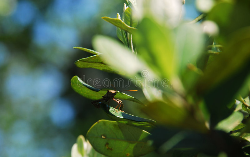 Insect among leaves royalty free stock photography