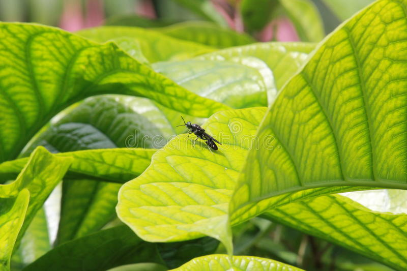 Insect on leaves royalty free stock photos