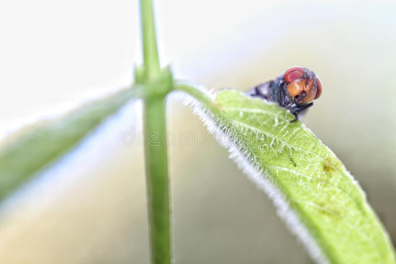 Insect stock images