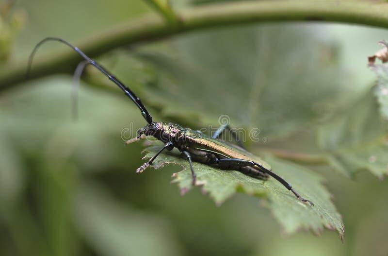 Insect, Longhorn Beetle, Invertebrate, Fauna stock photos