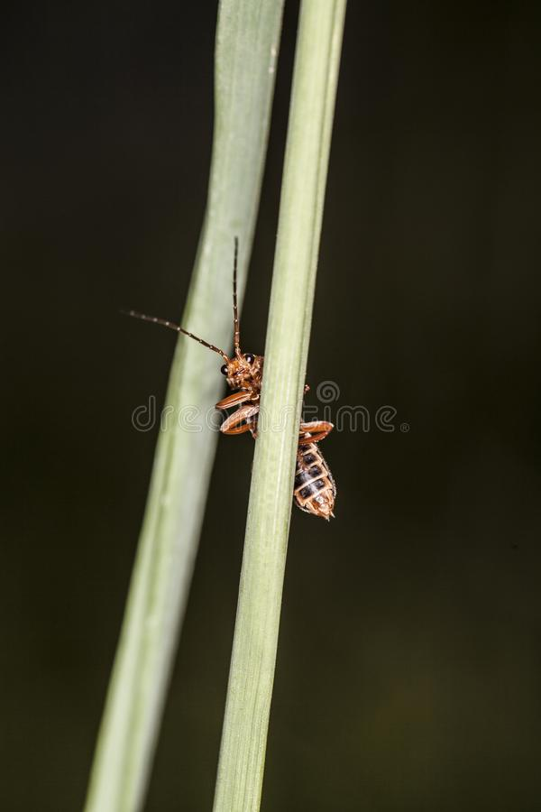 Insect looks from behind the grass royalty free stock image