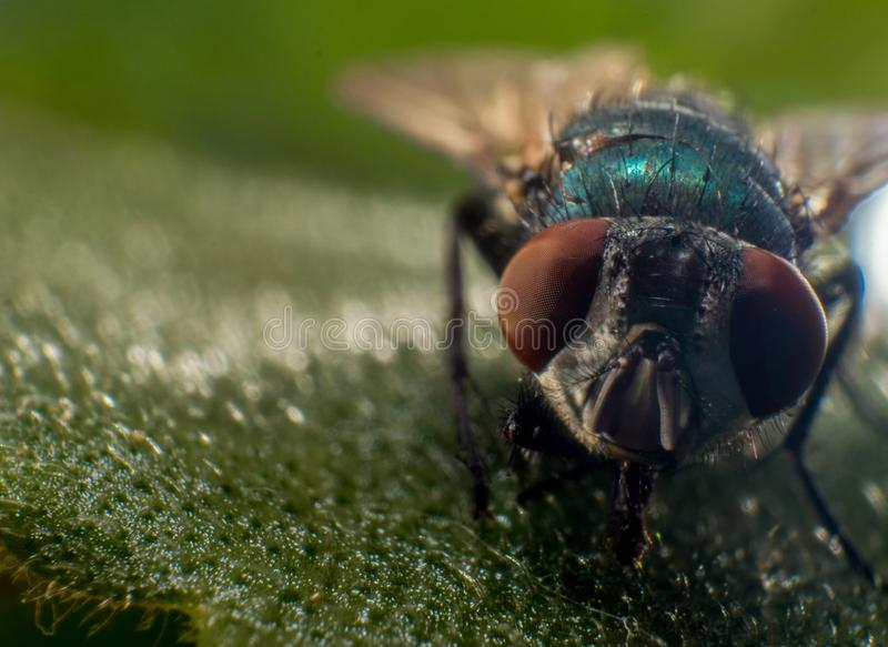 Insect, Macro Photography, Close Up, Fly Free Public Domain Cc0 Image