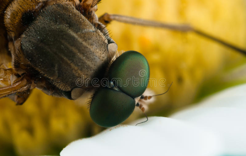Insect macro. View from above on a flower stock image