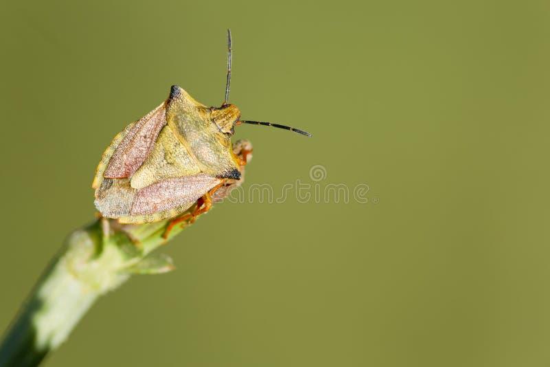 Insect macrofotografie royalty-vrije stock fotografie