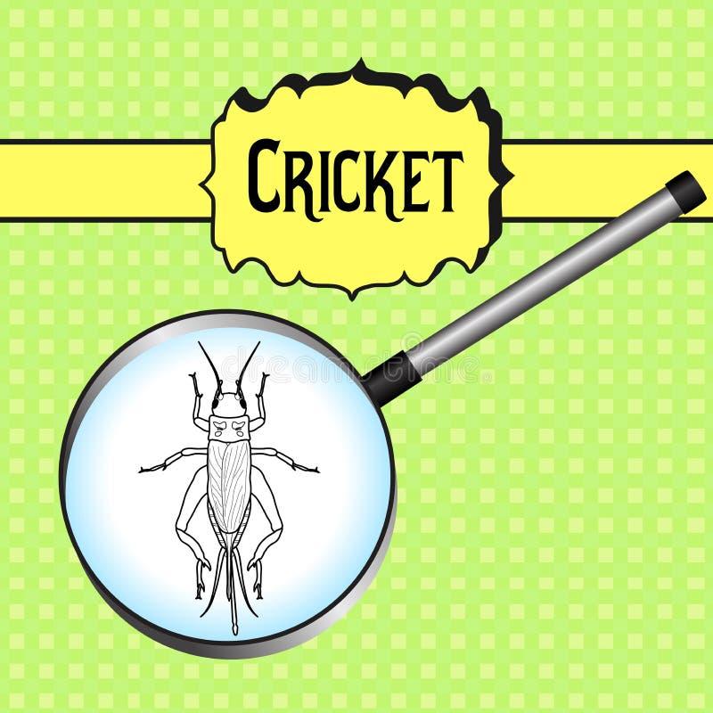 Insect in magnifier.. cricket. grig. Gryllus. Campestris. Sketch of cricket. cricket Design for coloring book. hand-drawn cricket. Vector illustration stock illustration