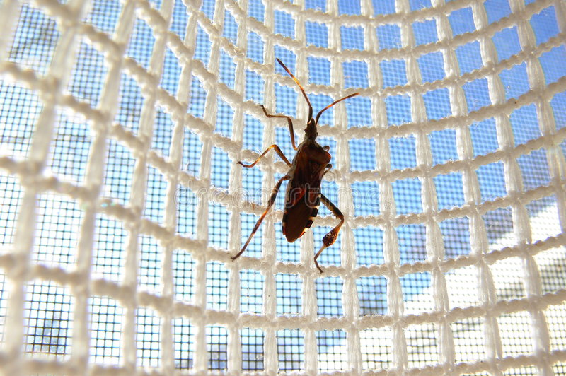 Insect on Mesh royalty free stock images
