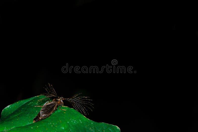 Insect met luchtige aanhangsels royalty-vrije stock afbeeldingen