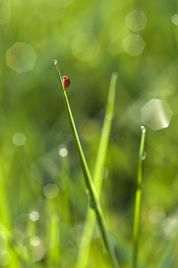 Insect met waterdaling. royalty-vrije stock fotografie