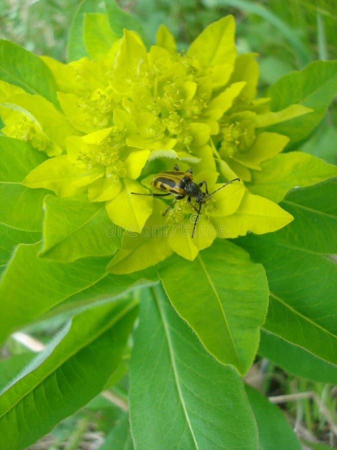 Insect op bloemen stock afbeelding