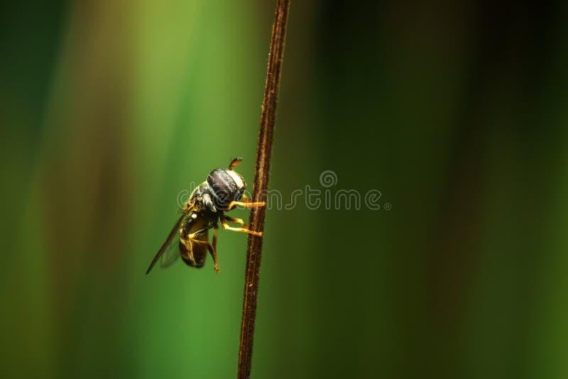 Insect op droog blad, achtergrondstijl royalty-vrije stock foto's