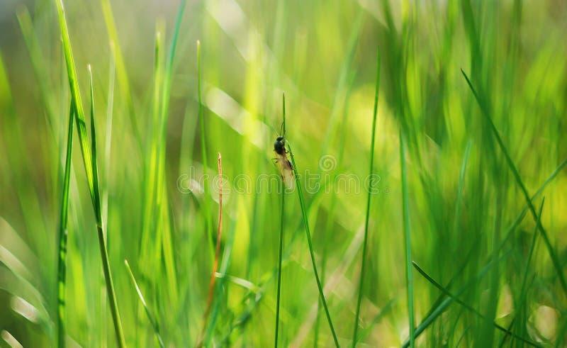 Insect op een bergopwaartse strijd stock afbeelding